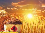 《阳光下的淮河娃》儿童节目舞蹈表演麦田丰收舞台背景 视频素材